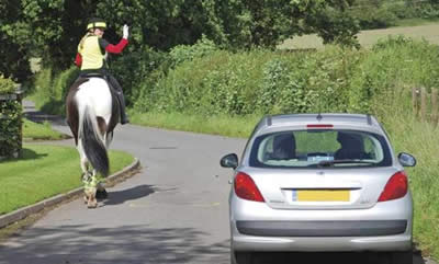 horse on the road hazard